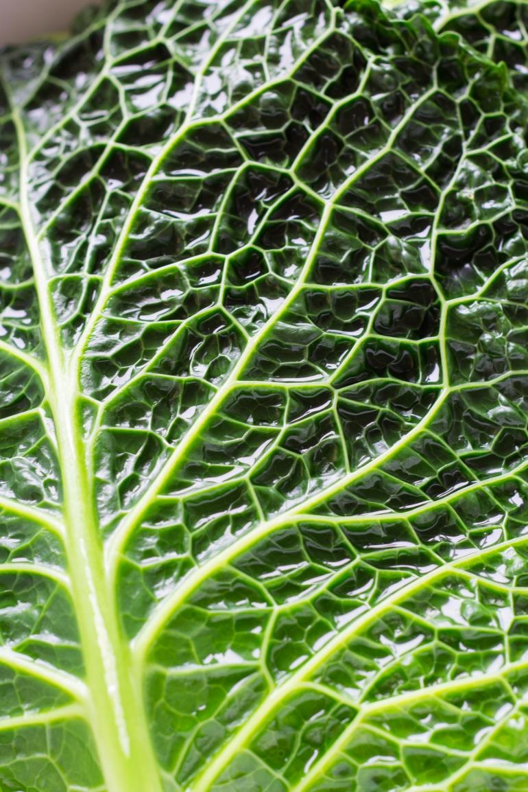 wegetariańskie gołąbki kuchnia agaty (2)